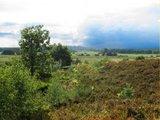 thumbnail - Die Heide Rethwiesenberg bei Elm
