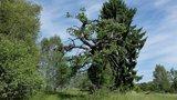 thumbnail - Die Trupbacher Heide bietet eine ungewöhnliche Natur und viele Aussichtspunkte zum Verweilen