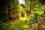 thumbnail - Wandern zwischen Manebach, Elgersburg und der Hohen Warte