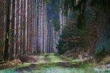 thumbnail - Naturnaher Wanderweg