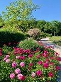 thumbnail - Blumen und Bäume