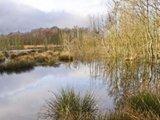 thumbnail - Das Hohe Moor wird renaturiert