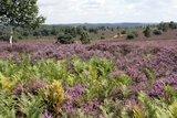 thumbnail - Die Mehlinger Heide