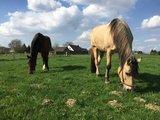thumbnail - Schleifenroute - zu Pferd