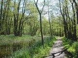 thumbnail - Auch grüne Wälder gibt es hier zu entdecken