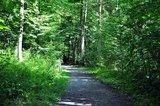 thumbnail - Ein Stück des Walderlebnispfades.