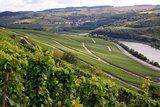thumbnail - Weinbau an der Mosel