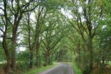 thumbnail - Residenzort und Rhododendronstadt - Streckenabschnitt