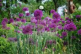 thumbnail - Garten Reese in Hohnhorst