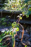 thumbnail - Radweg entlang der alten Bahn