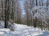 thumbnail - Verschneite Buchenwälder am Sauerland-Höhenflug