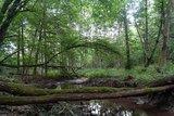 thumbnail - Auwälder
