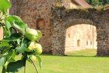 thumbnail - Apfelbaum vor Kloster Buch bei Leisnig