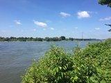 thumbnail - Blick auf das Naturschutzgebiet Rheinaue Binsheim
