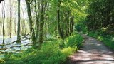 thumbnail - Schattige Wälder erleben