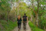 thumbnail - Wanderer im Wald