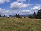 thumbnail - An der Milseburg bieten sich uns herrliche Panoramablicke.