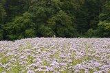 thumbnail - Blumenwiese am Waldrand