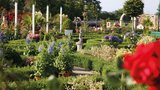 thumbnail - 3.000 Rosenpflanzen im
