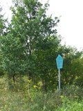 thumbnail - Pfad des Baumes Hohendorf