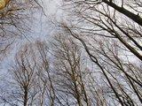 thumbnail - Buchenkronen im Herbst