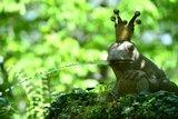 thumbnail - Märchenhaftes im Garten