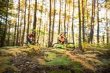 thumbnail - Mountainbiker im Wald
