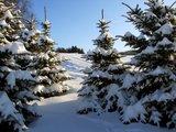 thumbnail - Winterwald in Erlbach