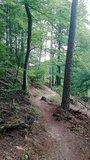 thumbnail - Trail im Moosalbtal