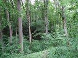 thumbnail - Urwald mitten in Deutschland