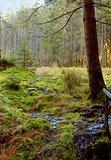 thumbnail - Grünheider Hochmoor