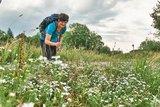 thumbnail - Blumenpracht am Wegesrand