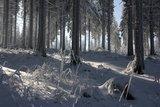 thumbnail - Winterwald