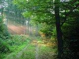 thumbnail - Magisches Waldlicht
