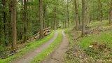 thumbnail - Lichte Eichen-, Buchen- und Fichtenhochwälder mit Jungholz prägen die Runde um den Hamberg