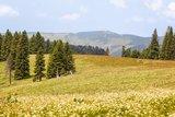 thumbnail - Blick zum Schauinsland vom Feldberg