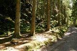 thumbnail - Wandern im Hochschwarzwald
