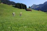 thumbnail - Rennradtouren im Bregenzerwald