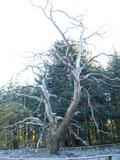 thumbnail - Die Eichen im Boitzenburger Tiergarten sind 300 bis 900 Jahre alt.
