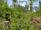 thumbnail - Wald in Osing bei Laufen