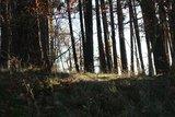 thumbnail - Wald