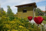 thumbnail - Schaubienenhaus im Frühling