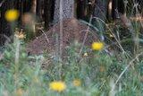 thumbnail - Ameisenhaufen
