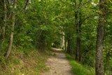 thumbnail - Wald Bad Mergentheim
