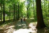 thumbnail - Wandern im Colditzer Forst