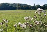 thumbnail - Blick über Weiden