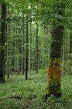 thumbnail - Kunst im Wald