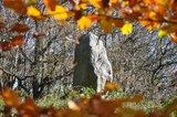thumbnail - Findling auf dem Heidberg