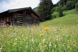 thumbnail - Bergwiese mit Stadl