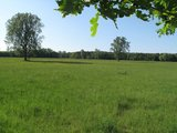 thumbnail - idyllische-wiesenlandschaft-am-bellheimer-wald